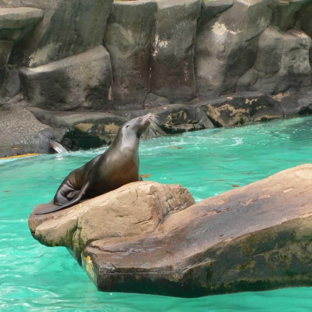 אריה ים באקוופוליס